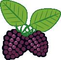 black_rasberry_highland_pyo2x